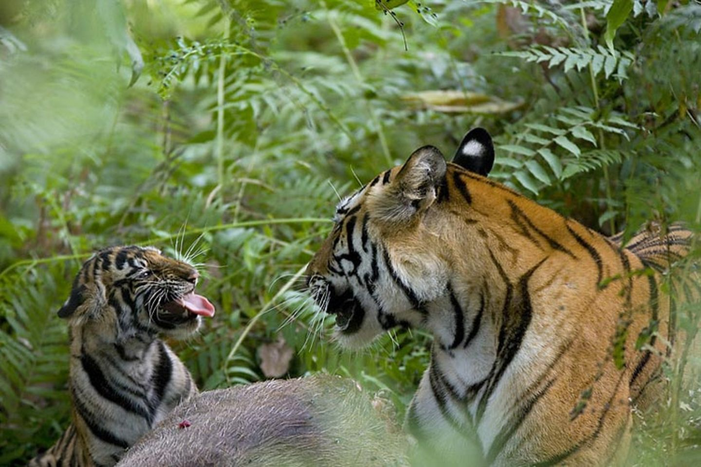 Fotoshow: Tierkinder
