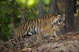 Fotoshow: Tierkinder - Bild 2