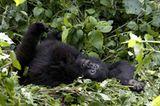 Fotoshow: Tierkinder - Bild 8