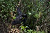 Fotoshow: Tierkinder - Bild 9