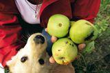 Obst für die Nachwelt - Bild 3