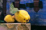Obst für die Nachwelt - Bild 4