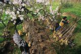 Obst für die Nachwelt - Bild 5
