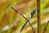 Das User-Foto des Tages - Oktober 2007 - Bild 13