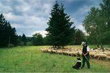 Fotoshow: Wildnis in Thüringen - Bild 9