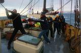 Fotoshow: Reise ins arktische Eis - Bild 7