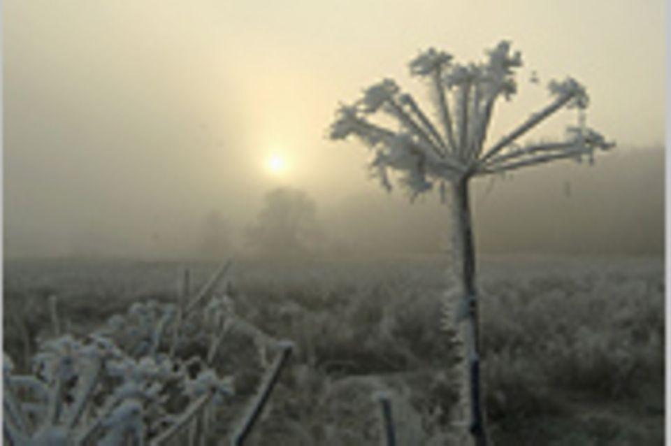 Das User-Foto des Tages - Dezember 2007