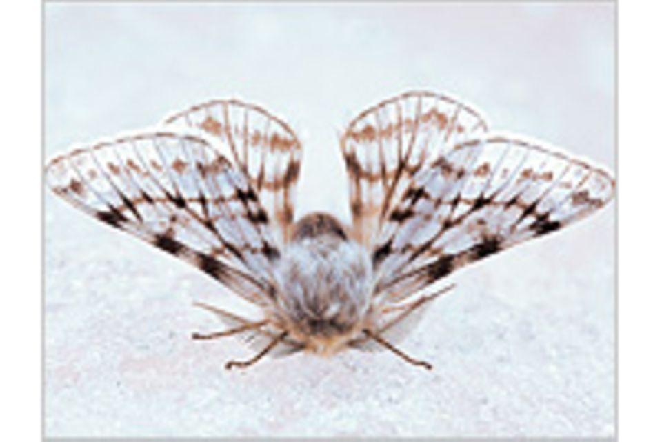 Fotogalerie: Schmetterlinge