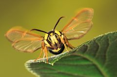 Fotogalerie: Schmetterlinge - Bild 2