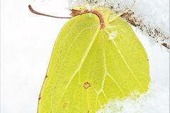 Fotogalerie: Schmetterlinge - Bild 3