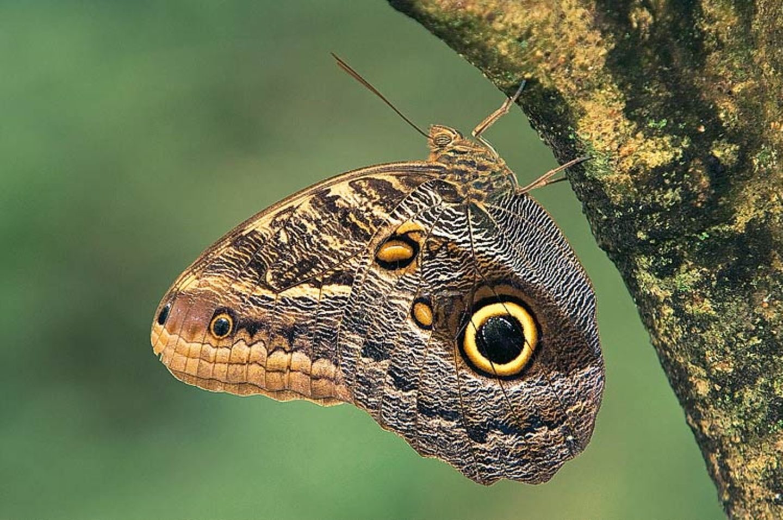 Fotogalerie: Schmetterlinge - Bild 8