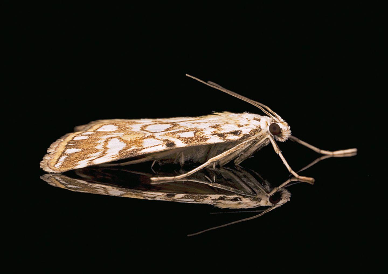 Fotogalerie: Schmetterlinge - Bild 10