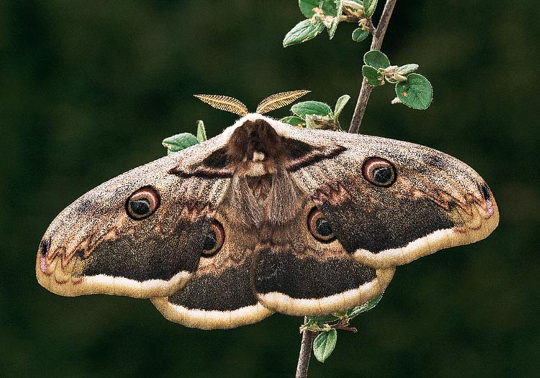 Fotogalerie: Schmetterlinge - Bild 11