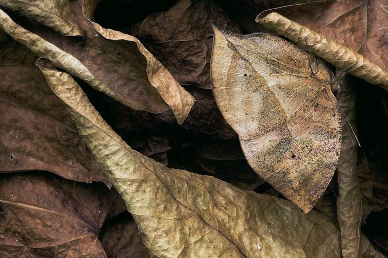 Fotogalerie: Schmetterlinge - Bild 12