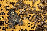 Fotogalerie: Schmetterlinge - Bild 13