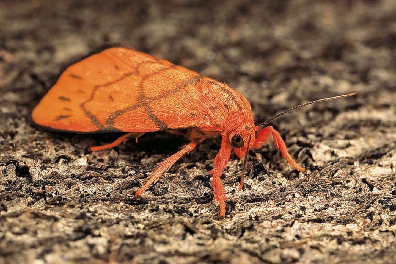 Fotogalerie: Schmetterlinge - Bild 15