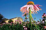 Heilpflanzen: Zurück zur Natur