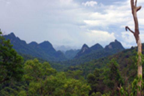 Fotoshow zum Waldschutzprogramm in Vietnam