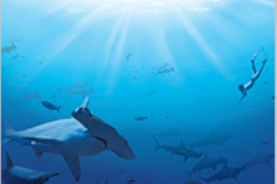 Illegale Fischerei: Haie ohne Flossen