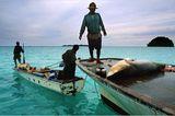 Illegale Fischerei: Haie ohne Flossen - Bild 6