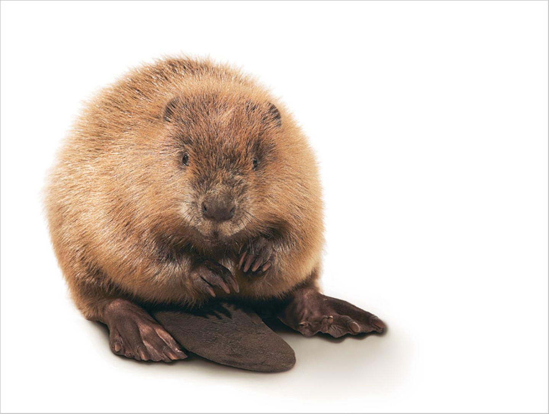 Fotogalerie: Biodiversität - Vom Wert der Vielfalt - Bild 11