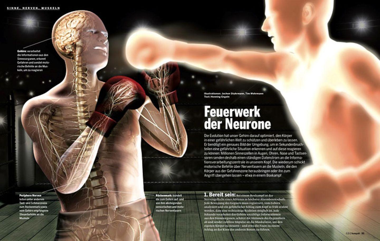 Das Gehirn: Sinne, Nerven, Muskeln
