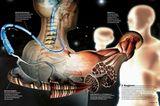 Das Gehirn: Sinne, Nerven, Muskeln - Bild 5