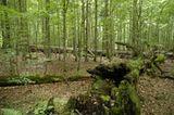 10. GEO-Tag im Nationalpark Bayerischer Wald - Bild 8