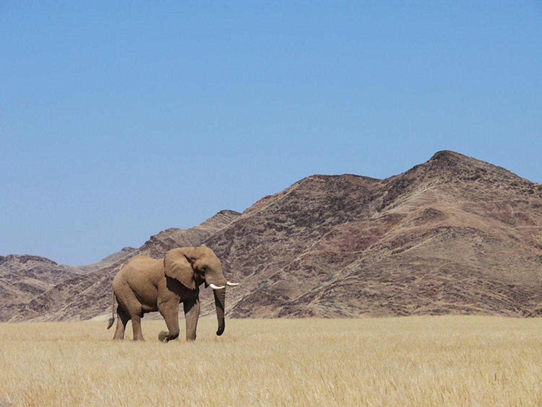 Fotogalerie: Namibias Wildnis
