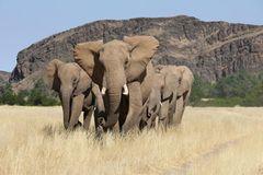 Fotogalerie: Namibias Wildnis - Bild 2