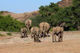 Fotogalerie: Namibias Wildnis - Bild 3