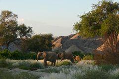 Fotogalerie: Namibias Wildnis - Bild 4