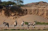 Fotogalerie: Namibias Wildnis - Bild 5