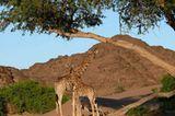 Fotogalerie: Namibias Wildnis - Bild 7