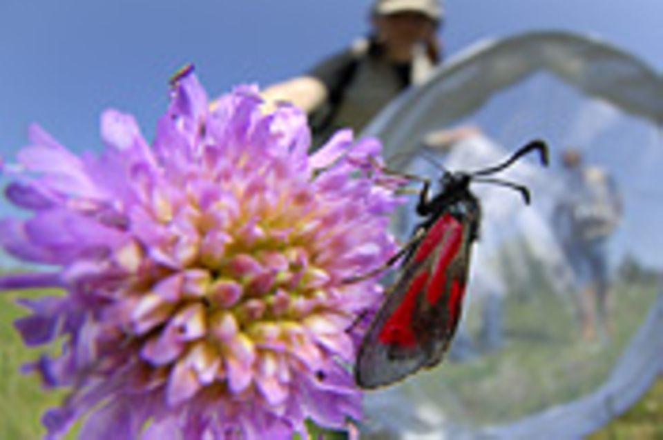 Fotogalerie: Zehn Jahre GEO-Tag der Artenvielfalt