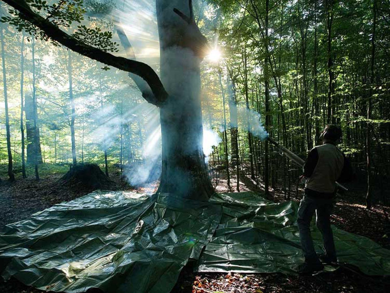Fotogalerie: Zehn Jahre GEO-Tag der Artenvielfalt - Bild 7
