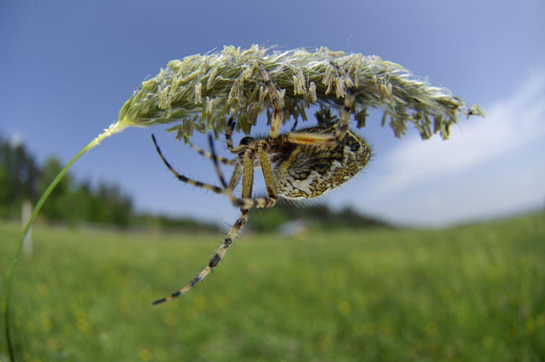 Fotogalerie: Zehn Jahre GEO-Tag der Artenvielfalt - Bild 10
