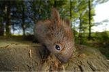 Fotogalerie: Zehn Jahre GEO-Tag der Artenvielfalt - Bild 11