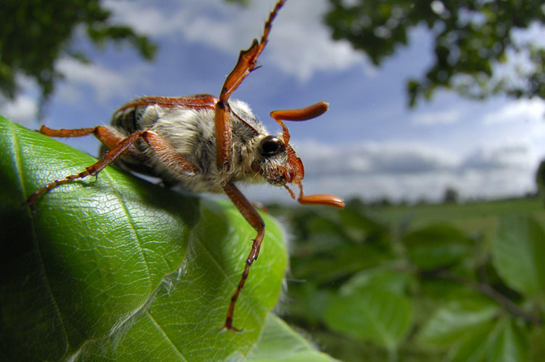 Fotogalerie: Zehn Jahre GEO-Tag der Artenvielfalt - Bild 13