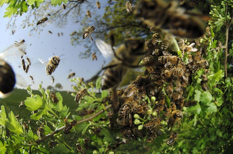 Fotogalerie: Zehn Jahre GEO-Tag der Artenvielfalt - Bild 15