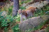 Fotogalerie: Zehn Jahre GEO-Tag der Artenvielfalt - Bild 16