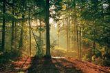 Fotogalerie: Zehn Jahre GEO-Tag der Artenvielfalt - Bild 17