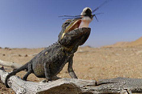 Überraschung in der Wüste