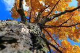 Die besten User-Fotos - Oktober 2008 - Bild 5