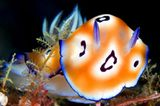 Die besten User-Fotos - Oktober 2008 - Bild 7