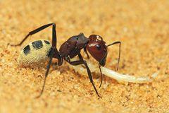 Fotogalerie: Überleben in der Namib - Bild 2
