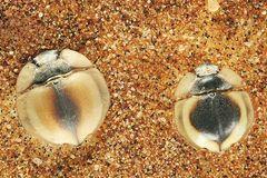 Fotogalerie: Überleben in der Namib - Bild 3