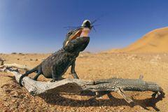 Fotogalerie: Überleben in der Namib - Bild 4