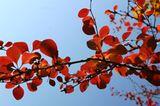 Die besten User-Fotos - November 2008 - Bild 16