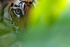 Fotogalerie: Die Augen des Dschungels